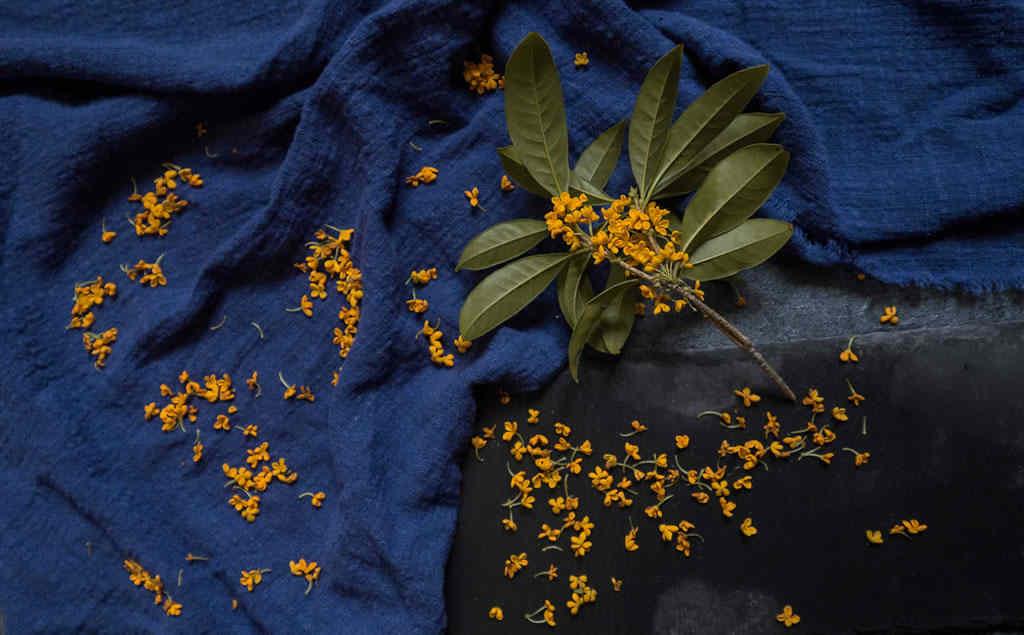桂花是我每年秋天最期待的风物之一